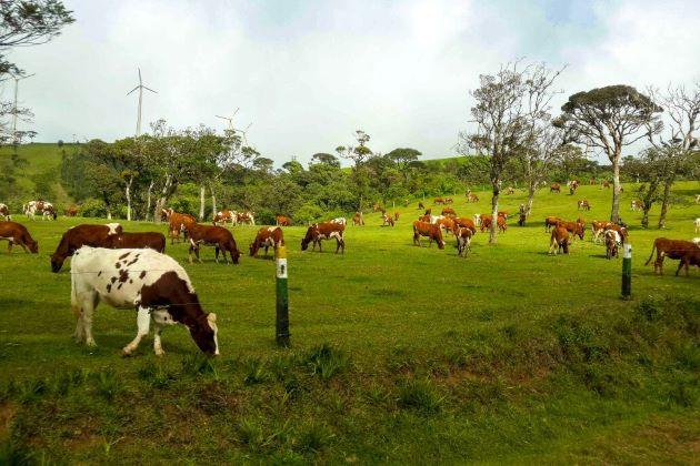 Ambewela Farm nuwara eliya sri lanka points of interest