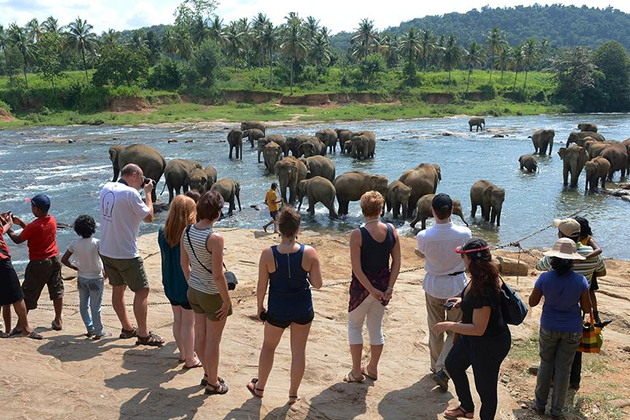 Best Time to Visit Northeast Sri Lanka