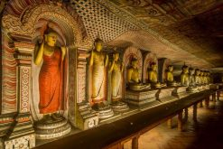 Dambulla best sri lanka tours