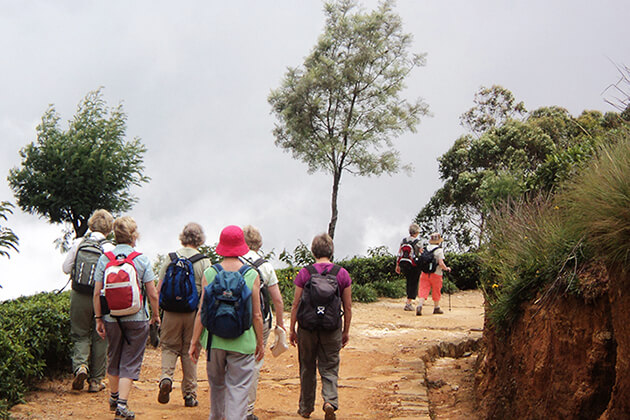 Follow the Tea Trails - sri lanka family tours