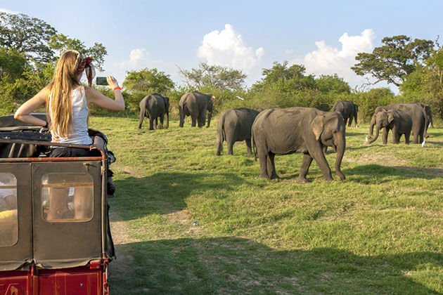 Jeep Safari In Yala National Park