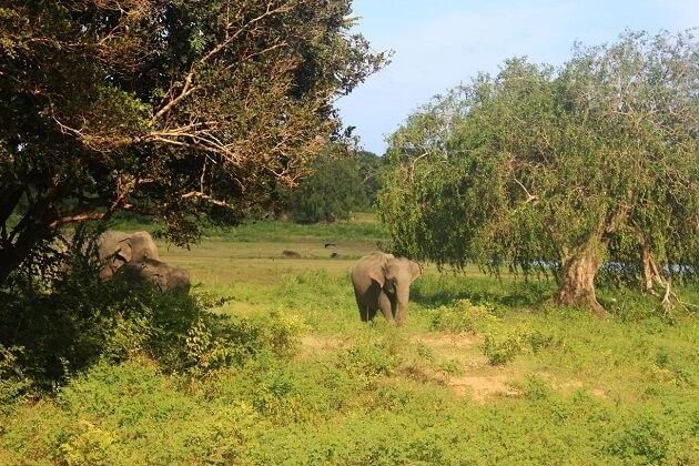 Lahugala National Park - sri lanka luxury tour