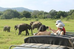 Minneriya National Park - sri lanka adventure holiday