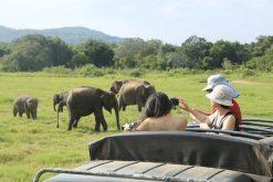 Minneriya National Park - sri lanka adventure holiday
