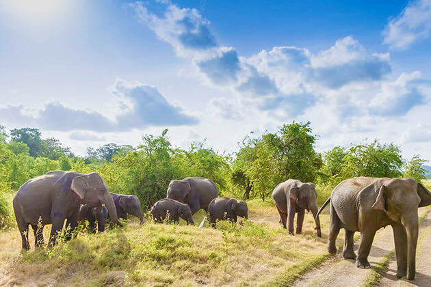 Minneriya National Park sri lanka holidays