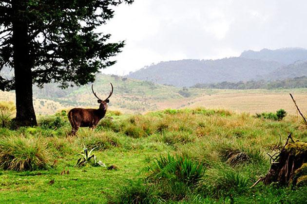 Natural World Heritage - Central Highlands of Sri Lanka