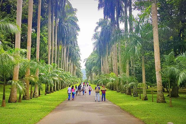 Peradeniya Botanical Garden - sri lanka family trip
