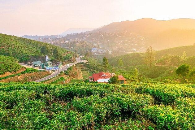 Petro Tea Estates - nuwara eliya places for visit