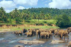 Pinnawala Elephant Orphanage Sri Lanka Family Tour