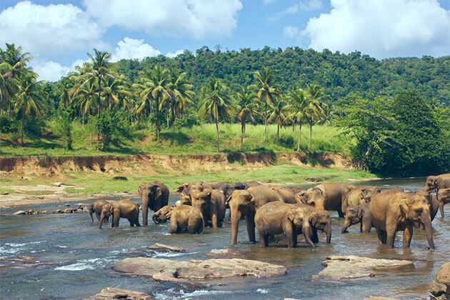Pinnawala Elephant Orphanage Sri Lanka Family Tour