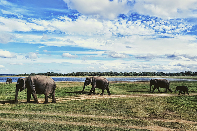 Safari adventure in Kaudulla National Park Sri Lanka