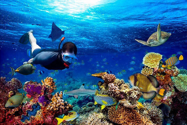Scuba Diving - adventure tours in sri lanka