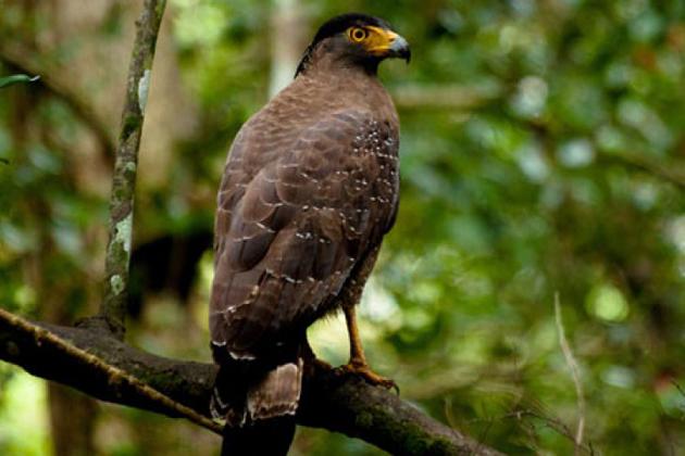 Sinharaja Forest Reserve - Sri Lanka Natural World Heritage