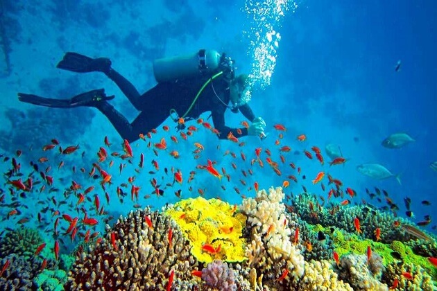 Snorkeling and Scuba Diving - things to do in mirissa
