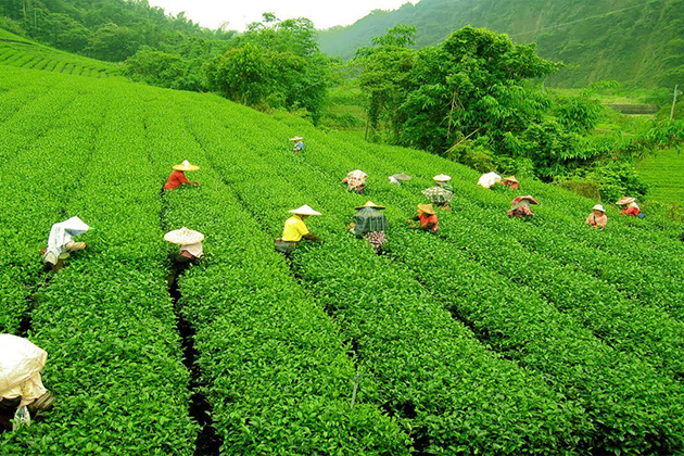 Trek through tea plantations in Nuwara Eliya Sri Lanka
