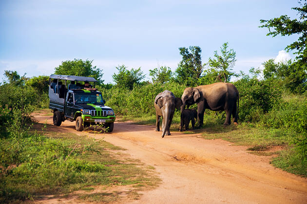 Udawalawe National Park - best sri lanka beach holiday