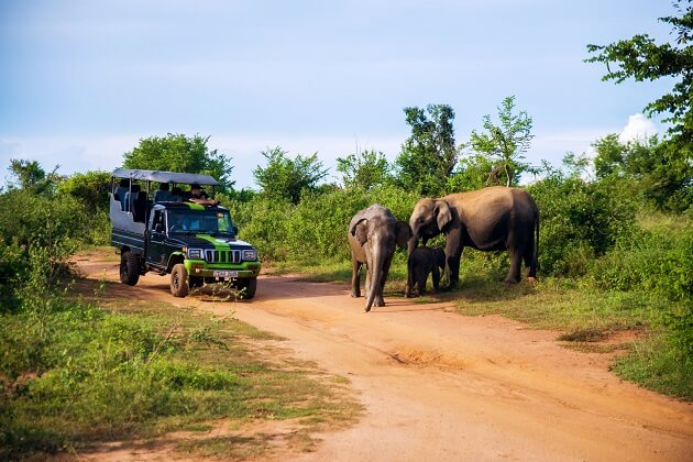 Udawalawe National Park - sri lanka classic tour