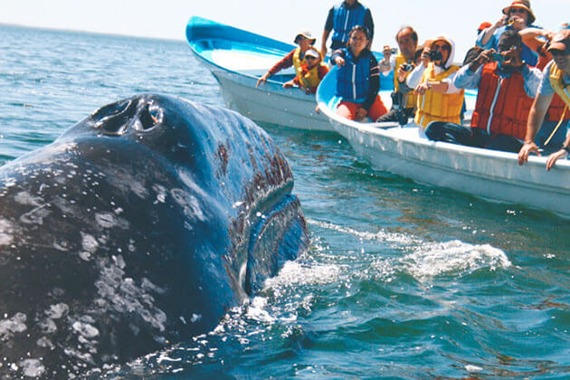 Whale Watching - adventure holiday packages in sri lanka