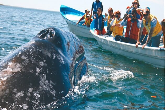 Whale Watching in Mirissa - fun things to do in mirissa