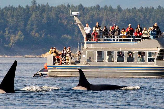 Whale Watching - sri lanka adventure tours