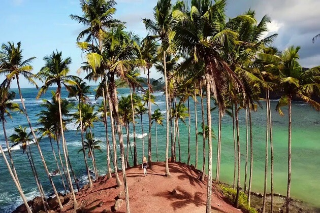coconut tree hill mirissa sri lanka things to do