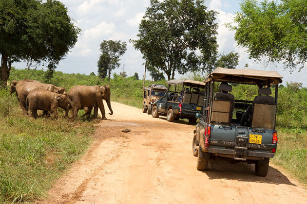 jeep safari - adventure tours of sri lanka