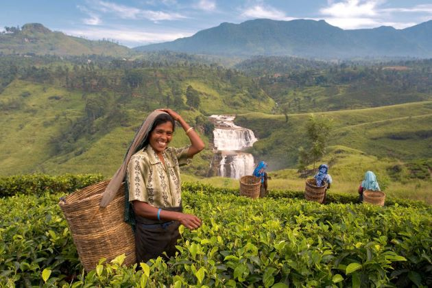 local insights sri lanka holiday packages
