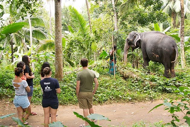 pinnawala elephant orphanage - sri lanka family tour package