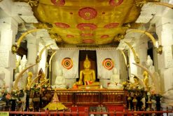 temple of the tooth best tour packages in sri lanka