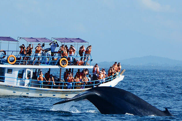whale watching - family trip in sri lanka