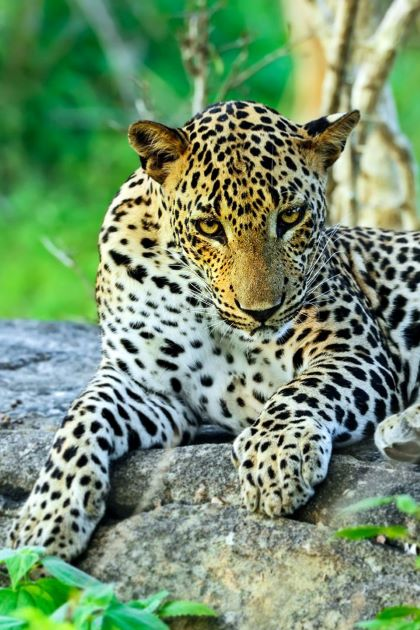 wildlife tours and sightseeing in sri lanka
